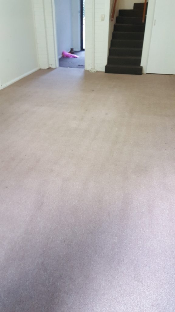 Keiraville carpets after cleaning by ChemDry Excellence