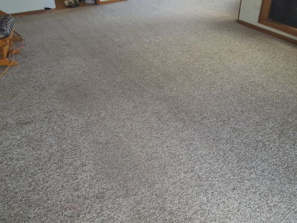 after carpet cleaning in Farmborough Heights in Illawarra
