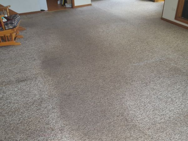 before carpet cleaning in Farmborough Heights in Illawarra
