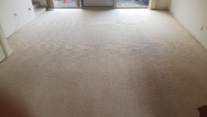 chemdry removed dirt and stains from these carpets in Wollongong rental property