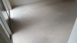 filthy carpets in wollongong rental property - before chemdry cleaning
