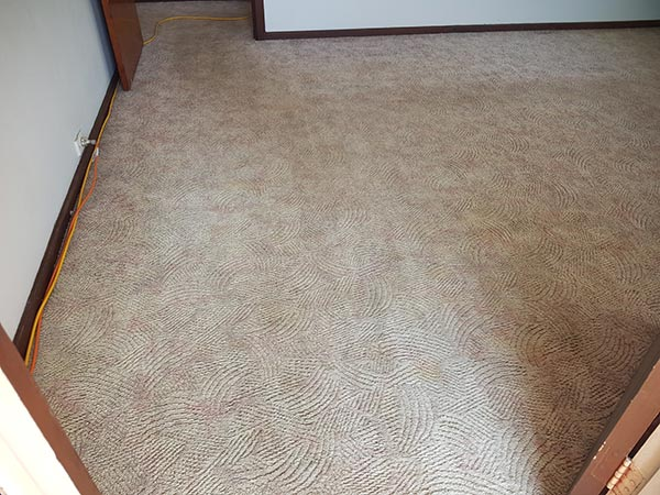 After end of lease carpet cleaning by Chem-Dry Excellence - image